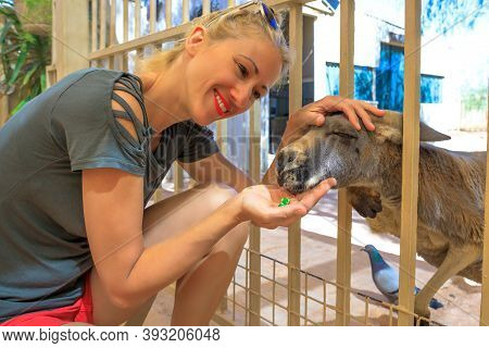 Tourist Woman Feeding Kangaroo In Australia. Interacting With Cute Kangaroo Orphan. Australian Marsu