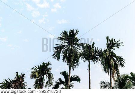 Coconut Palm Tree Background Photo In Autumn Seasonal Theme Back-lit But Vibrant Color Sunrise Sky.