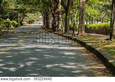 Two Lane Rural Road Shaded By Large Shade Trees In Mountain Park.