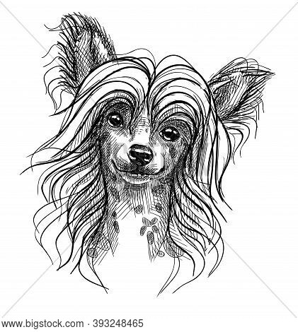Portrait Of A Small Dog, A Chinese Crested Puppy. Hand-drawn Sketch With Black And White Pen, Realis