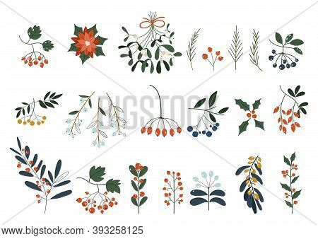 Set Of Plants With Flowers, Spruce Branches, Leaves And Berries. Christmas Decorations. Holly, Spruc