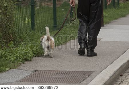 Pet Owner Taking Dog For A Walk