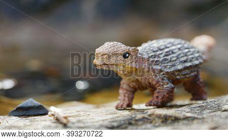 Ankyrosaurus Dinosaurs Little On Nature Background. Closeup Dinosaur And Monster Model. The Dinosaur
