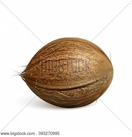 Coconut Freshness Tropical Nut Tree Fruit Vector. Vegetarian Delicious Exotical Ripe Coconut, Gourme