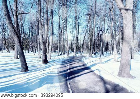 Winter park alley, winter landscape with falling snow over winter park. Winter sunny scene with snowfall. Winter sunny landscape