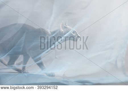 Horizontal Photo Of A Beautiful Elegant Oriental Cat, On A Gray Background In A Room In The Studio U