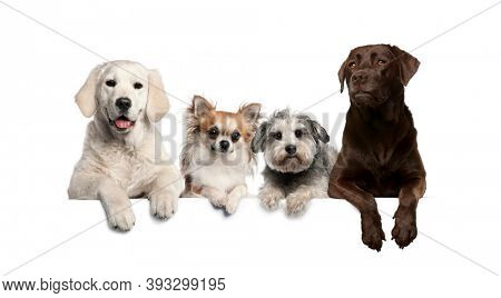 Group of dogs, pets, leaning on a white empty board