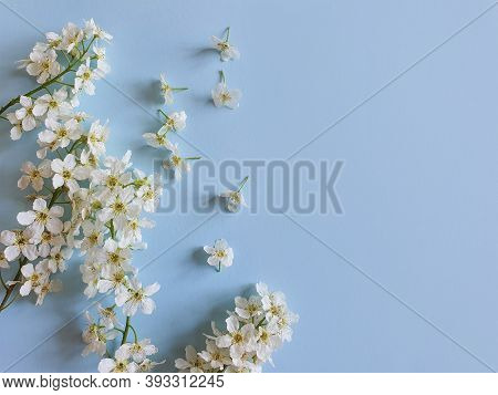 Small White Cherry Flowers On A Blue Background. Floral Frame Or Border, Basis For Cards, Invitation