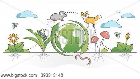 Food Chain Process Cycle With Producers And Apex Predators Outline Concept. Natural Animal Wildlife