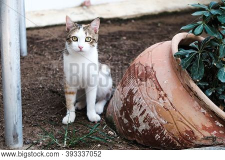 Homeless Cat Sitting On The Ground In A Village Outside. Serious Expression Of Bewilderment, Confusi