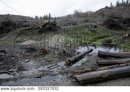 Cheia, Romania - October 31, 2020: Cut Down Trees Near The Cheia Village In The Prahova County, Roma