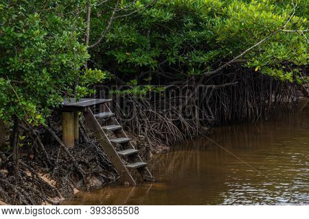 Mangrove Forest With Wooden Stair In Nature  Thailand.