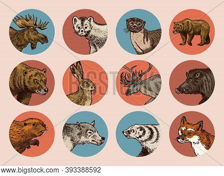 Wild Animals Stickers In Vintage Style. Forest Deer Beaver Elk Wolf Bear Fox Marten Badger Boar Hare