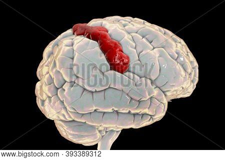 Human Brain With Highlighted Postcentral Gyrus, 3d Illustration. It Is Located In The Lateral Pariet
