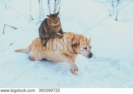 Funny Cat And Dog Are Best Friends. Cat Riding The Dog Outdoors In Snowy Winter
