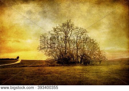 Silhouette Of Leafless Trees With Sky On A Grunge Background