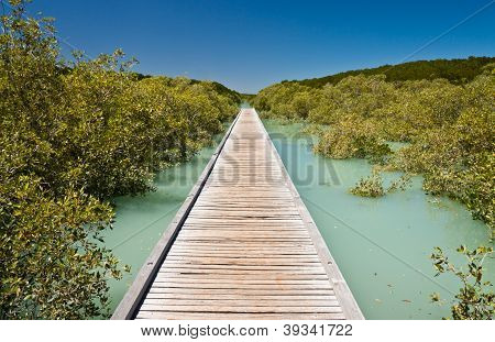 Jetty Into The Mangroves