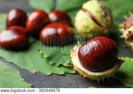 Horse Chestnut In Husk And Leaves On Grey Table, Closeup