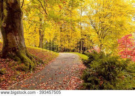 Autumn landscape Baden-Baden. Europe. Germany