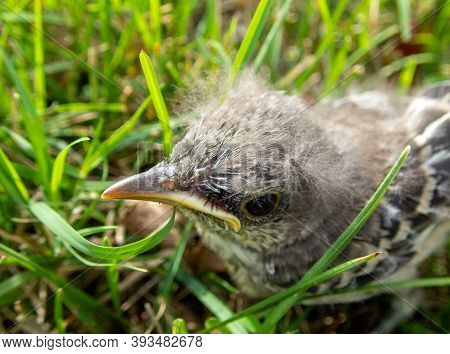 This Baby Bird Has Been Lost Or Abandoned In The Grass In Missouri And Looks Lost And Forlorn And Ve
