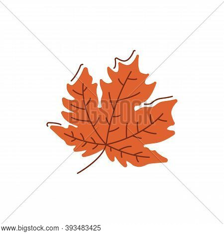 Dried Brown Leaf Flat Vector Abstract Element. Falling Leaves. Nature Generosity. Autumn Season Rgb