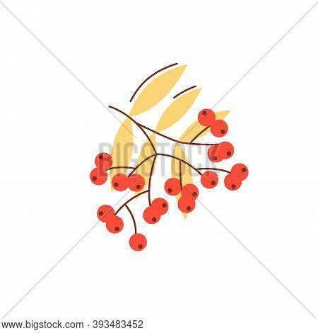 Rowanberry In Fall Season Flat Vector Abstract Element. Nature Generosity. Wild Ash. Autumn Berries