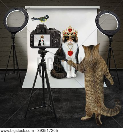 A Cat Photographer Is Photographing A Cat In A Gold Crown Its Photo Studio.