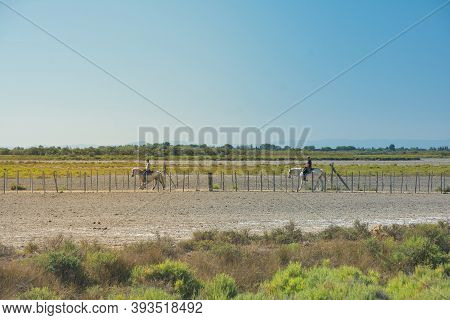 Camargue,france-august 14,2016people With Horses :strolling In The Park Of The Camargue In France Du