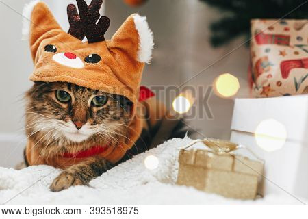 Sweet Tabby Cat In Cute Reindeer Costume Sitting At Stylish Gift Boxes In Christmas Lights. Maine Co