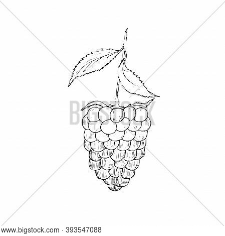 Blackberry Raspberries Flat Icon On White Background
