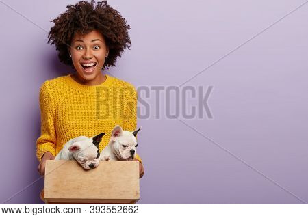 Pet Care Concept. Joyous Dark Skinned Female Owner Holds Her Puppies In Small Wooden Box, Ready To G