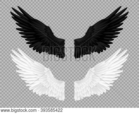 Black And White Angel Wings. Swans And Crows Feather, Bird Carnival Costume. Parts Of Flying Feather