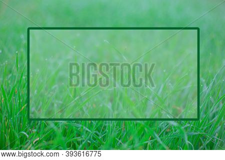 Green Grass With Dewdrops At Sunrise In Foggy Haze, Selective Focus.