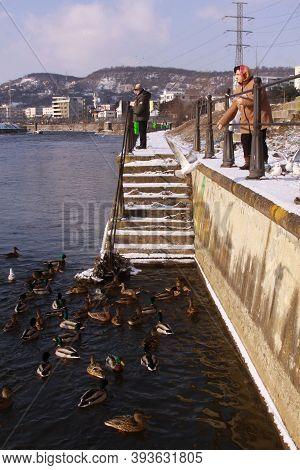 Cluj-napoca, Romania - January 15, 2019: People Feeding Ducks On Somes River In Cluj City. Woman Fee