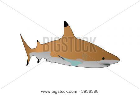 Sharkiivector