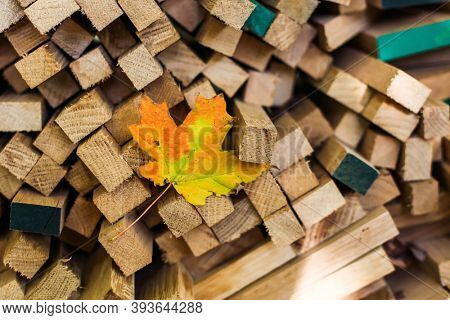 Multicolored autumn leaf with stocked wood outdoor
