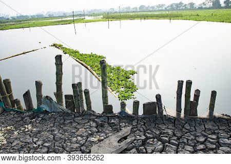 Beautiful Image Of Common Water Hyacinth In The Shape Of Kerala State During Kerala Piravi In Front