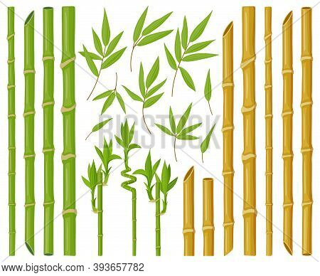 Cartoon Bamboo Plants. Asian Bamboo Stems, Stalks And Leaves, Fresh Green Stick Plants With Foliage,