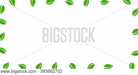 Falling Green Leaves. Fresh Tea Neat Leaves Flying. Spring Foliage Dancing On White Background. Amus