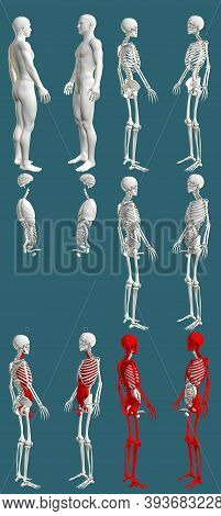 12 In 1, Male Body With Skeleton And Internal Organs - Colored Physiology Concept For Education - Cg