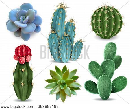 Popular Indoor Plants Elements And Succulents Rosettes Varieties Including Pin Cushion Cactus Realis