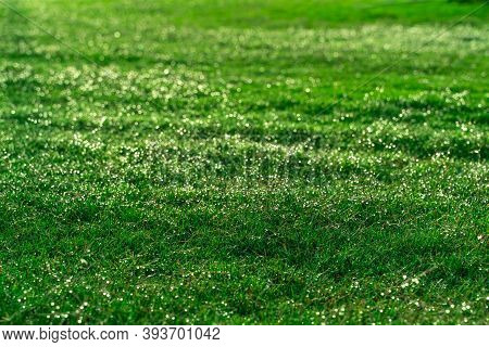 A Beautiful Lawn, A Green Grass With Stunning Drops Of Dew And A Shimmering Bokeh. Transparent Drops