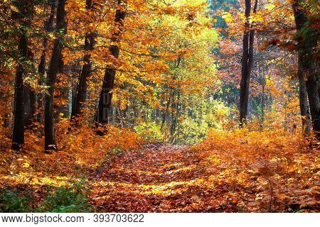 Landscape Of Autumn Forest. Autumn Leaf Fall In The Woodland. Sunlights Throught Foliage. Local Path