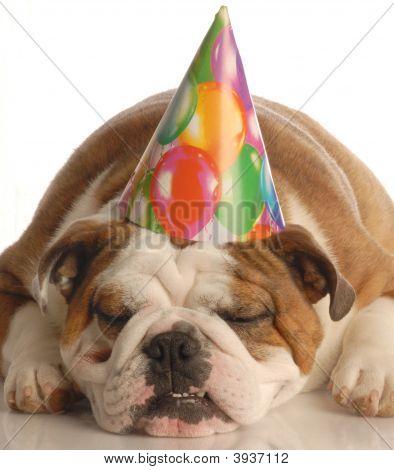 Bulldog With Birthday Hat