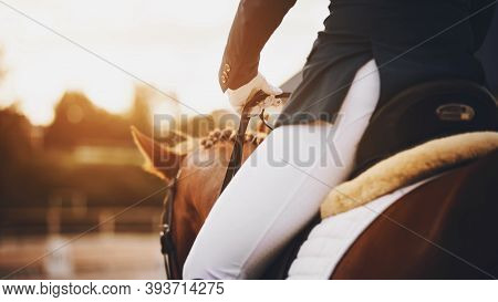 The Rider Sits In The Saddle On A Sorrel Horse And Holds It By The Reins, And Together They Ride To