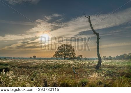 Dead Tree With Bracket Fungi In Autumn Heath Landscape With A Single Standing Full Grown Tree In Bac