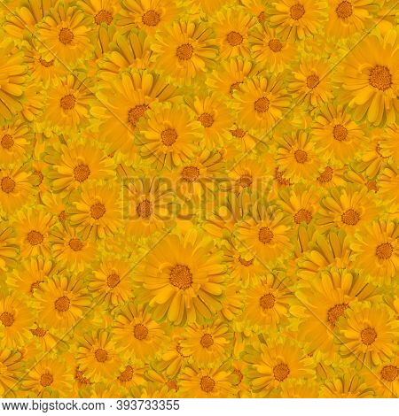 Seamless Floral Pattern Textures. Delicate Marigold Flowers. Decorative Design Elements