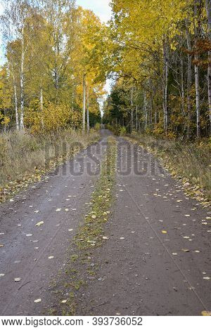 Beautiful Fall Season View By A Dirt Road With Glowing Aspens By Roadside