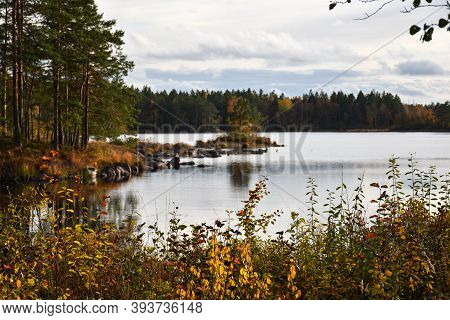 Calm Lake Colored In Fall Season Colors In The Province Smaland In Sweden