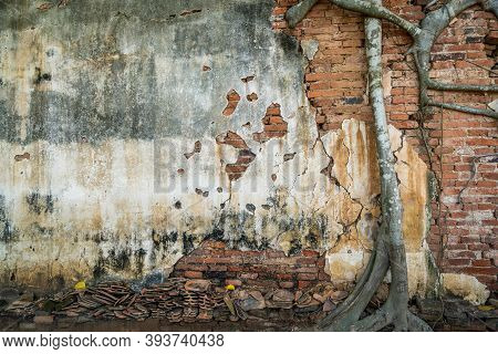Root Trees Overgrown Cracked Vintage Red Brick Wall Background .